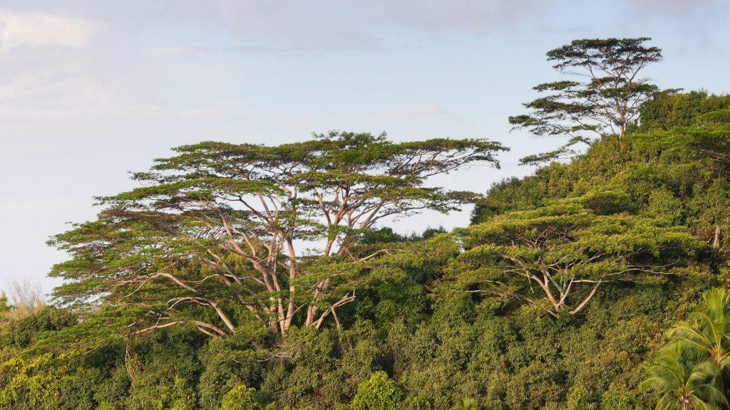 Tall trees on hillside